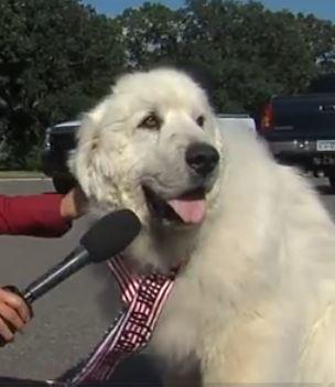 Mayor Duke The Dog