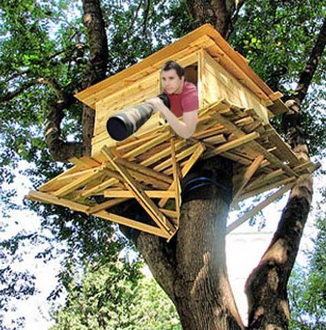 Tree House Paparazzo